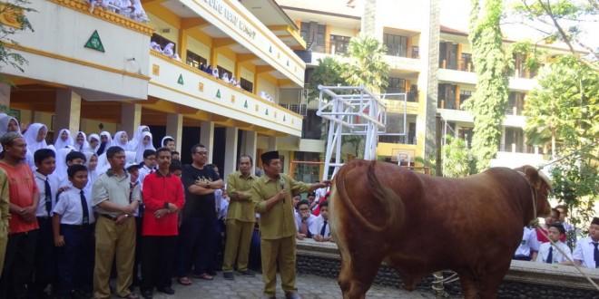 Penyembelihan Hewan Kurban di MTsN 1 Kota Malang